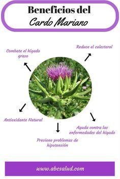 Healthy Nutrition, Get Healthy, Healthy Recipes, Health And Wellness, Health Tips, Health Fitness, Healing Herbs, Medicinal Plants, Natural Medicine