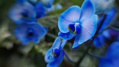 Blue Orchids, Flower Photos, Trees To Plant, Most Beautiful, Flora, Herbs, Rose, Plants, Photography