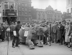 vintage everyday: An elephant stops traffic at London's Elephant and Castle by lying down in the middle of the road and refusing to move, 1934 Vintage London, Old London, South London, London Life, Old Pictures, Old Photos, Guy's Hospital, London Neighborhoods, Historia