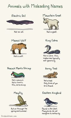 Animals with Misleading Names.