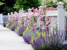 The roses are Jackson Perkins simplicity rose, the yellow flowers are spirea compacta ' goldmound', the purple and blues are a combination of Salvia 'May Night' and Nepeta 'Walker's Low', and the yellow is Ladies Mantel.