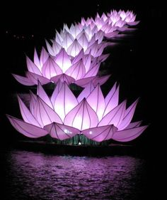 ○ Giant lotuses on Huong River. Purple.