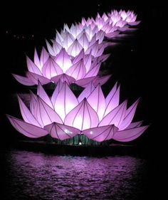 Giant lotuses on Huong River