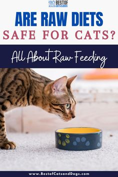 Raw Diets Are Packed With Protein And Nutrients That Support Healthy Teeth And Gums, And Optimal Digestion. Raw Diets Also Contain...Read More Here! #CatRawDiets #RawDietsForCats #RawCatFood