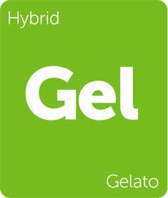 4b9048c459524b Gelato Cannabis Strain Information