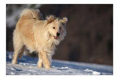 Luke Horses, Dogs, Animals, Doggies, Animais, Animales, Animaux, Horse, Animal