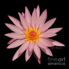 Layla Alexander photography prints and gifts shop. pink and white, home and office decor. framed prints, greeting cards, throw pillows, duvet covers, tote bags. This image has a transparent background for customisable background colours and fabric printing.