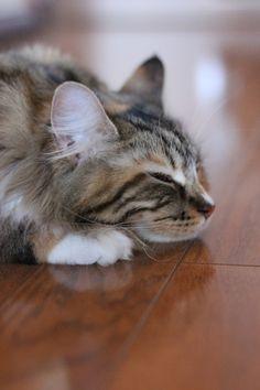 思考フル稼働中・・・ : 猫花雑記