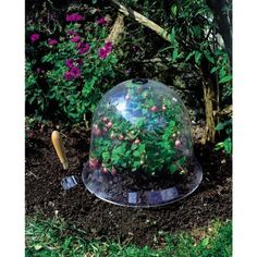 "Victorian Bell With Vent Large by Bosmere. $36.99. Can be used year round. Measures: 18"" diameter and 14"" high. Victorian Bells The Best In Plant Protection! The Large Victorian Bell is a highly decorative and effective garden cloche that replicates the design and shape of the early Victorian glass bells. This cloche is the largest in the range and is made from injection-molded top quality impact polystyrene. These cloches can be used all year round for protecting young..."