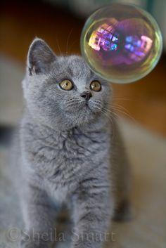 gray kitten & the bubble