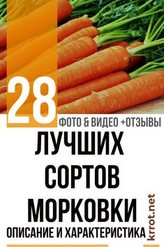 Carrots, Vegetables, Food, Lawn And Garden, Essen, Carrot, Vegetable Recipes, Meals, Yemek