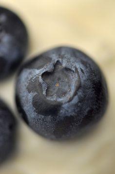 Blueberries by July Krischak - Creadora de Imágenes on 500px