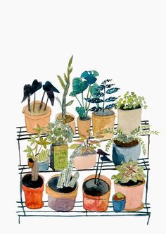 elizabeth barnett -- plants watercolor giclee print