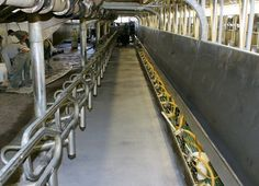 Dairy Floor coatings       Your #dairy #plant #flooring needs extra attention, so if you are looking for dairy floors installation expert, then choose #EP Floors, the best flooring contractor in your area. For more information visit our website https://www.epfloors.com or call us at 1–800–808–7773 extension 13.