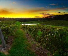 Stumbledupon Vinoklet Winery. Will visit again when open. Gorgeous vineyard.  http://www.vinokletwines.com/