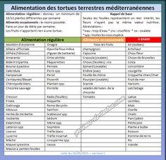 alimentation et nourriture des tortues terrestres sur graines-de-tortue.com