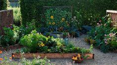 kombinácie rastlín pre chranu proti skodcom a chorobám v  zeleninovej záhradke