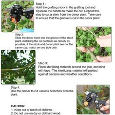 Migiwata Garden Fruit Tree Professional Pruning Shears Grafting Cutting Tool With 3 Replaceable Blades * You can learn even more information at the web link of the photo. (This is an affiliate link). Pruning Shears, Fruit Trees, Outdoor Gardens, Garden Tools, Canning, Plants, How To Make, Link, Gardening Scissors