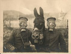 Soldiers and Mule Wearing Gas Masks.  Germany.  1916.