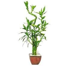 Image result for hardy house plants