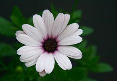http://www.freeflowerpictures.org/flower_pictures/image/Daisy_Flower_Picture.jpg