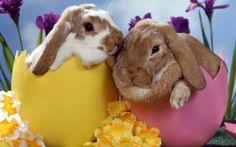 É bom saber! É pecado durante a Páscoa presentear com Coelhos e Ovos de chocolate.