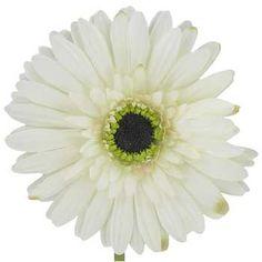 Cream Botanic Artistry Gerbera Daisy Stem