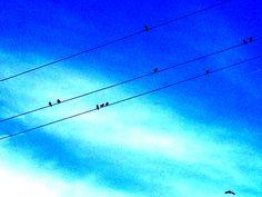 05/10/2012 -2.Gute Frage? Sammeln sich die Vögel bald....?