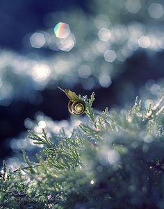 snail by MagdalenaMalik. @go4fotos
