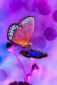 Papillon Beautiful Butterfly Pictures, Butterfly Photos, Butterfly Kisses, Butterfly Wings, Beautiful Butterflies, Beautiful Flowers, Flower Iphone Wallpaper, Butterfly Wallpaper, Kristina Webb