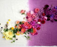 Melanie Haroldson - Design, Illustration and Art Direction