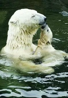 Bath time for Polar bears. Mama bear is enjoying baby bear's kisses. Animals And Pets, Baby Animals, Cute Animals, Mundo Animal, My Animal, Beautiful Creatures, Animals Beautiful, Tier Fotos, All Gods Creatures