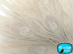 Wholesale Peacock Feathers 50 Pieces IVORY by MoonlightFeatherInc