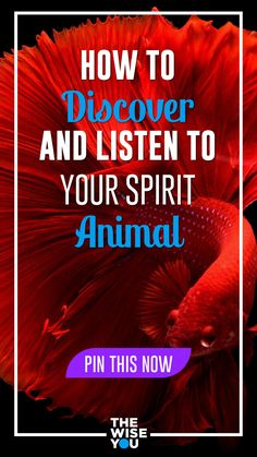 How to Discover and Listen to Your Spirit Animal Hope Quotes, All Quotes, Spiritual Awakening, Spiritual Quotes, Find Your Spirit Animal, Daily Affirmations, Finding Joy, Listening To You, Self Development