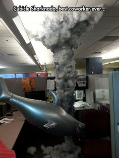 Sharknado in my office......