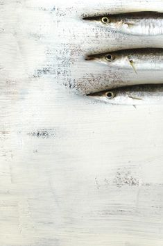 3 Fish | Aya Wind Photography