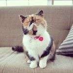 My favorite cat on Instagram has a canvas!!! :D