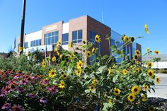 Annual sunflowers and echinacea in bloom in the second blooming season for the Cheyenne's BOPU Habitat Hero demonstration garden. Audubon Society, Love Garden, Nesting Boxes, The Rev, Plant Species, Native Plants, Worlds Of Fun, Sunflowers, Habitats