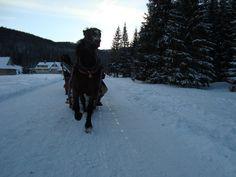 https://flic.kr/p/Qti2vA | horseride Tatra mountains | www.facebook.com/angrywaldeuszek/photos/