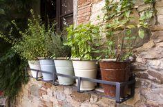 Giardinaggio fai da te: l'orto in casa #huertoencasa #ortosulterrazzo  #ortoincasa