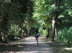 #green #trees #artisticphoto #summer #photo