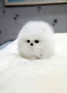 It's too fluffy to recognise what breed is it!