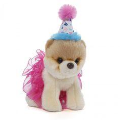 O cãozinho mais fofo do mundo com saia de tutu e chapéu de aniversário!