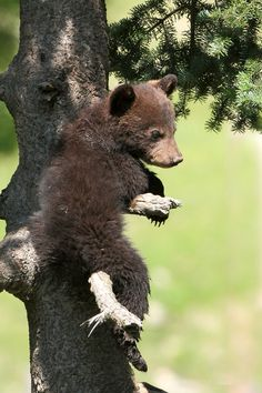 This proves that June is a terrible mother and put's her babies in trees just to get a good picture for what I can only assume was going to be a Christmas card.