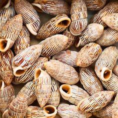 Basket Shells