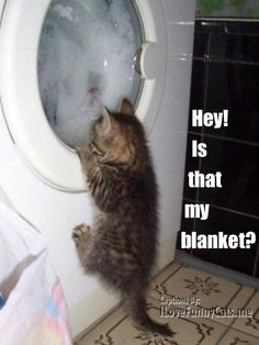 Does your cat have a favourite blanket or toy ? http://sulia.com/channel/animals/f/a14d14e3-baf3-4660-946a-71f7c0aacbc5/?pinner=124993693&