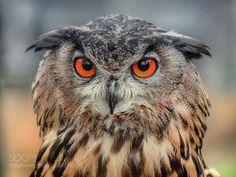 owl #PatrickBorgenMD