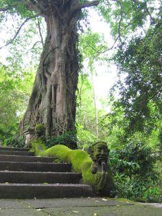 Wenara Wana,the Sacred Monkey Forest Sanctuary,Bali