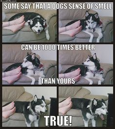 Dogs sense of smell...