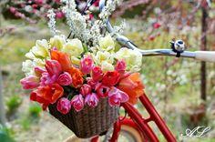 Ich liebe Tulpen! - Wohnen und Garten Foto